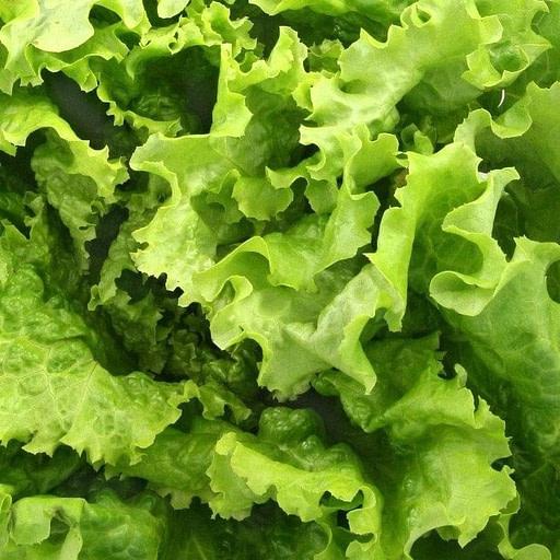 Salade Bio pour les salades maison de Luvin's | Livraison Perpignan